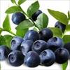 5 thực phẩm giúp tăng cường thị lực