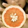 Tự chiết xuất pectic từ hạt bưởi giúp giảm béo, chữa bệnh tim mạch