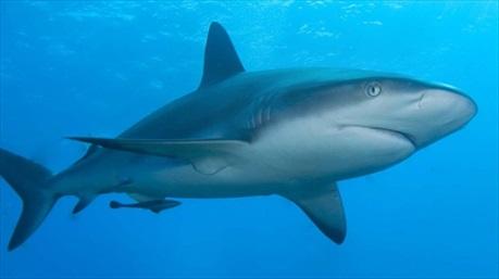 """Sụn cá mập – """"thần dược"""" cho xương khớp"""