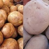 Chùm ảnh giúp phân biệt 14 rau quả Trung Quốc dễ dàng