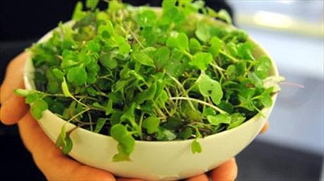 Cách trồng rau mầm không cần đất tại nhà