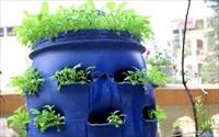 Phương pháp trồng rau cực hay ngay tại không gian nhỏ bé trong nhà bạn