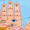 Ấn 5 đầu ngón tay tự kiểm tra sức khỏe các cơ quan nội tạng