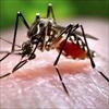 Phát hiện trường hợp nhiễm Zika đầu tiên tại Lào, Philippines
