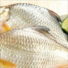 Những thời điểm nào tuyệt đối không nên ăn cá?