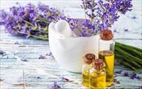 Bài thuốc dân gian trị ong đốt