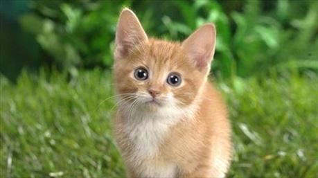 Hãy cứu rỗi cuộc đời của bạn bằng cách nhận nuôi ngay một chú mèo