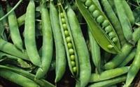 Tăng cường thực phẩm lên men cho vòng eo 'con kiến'