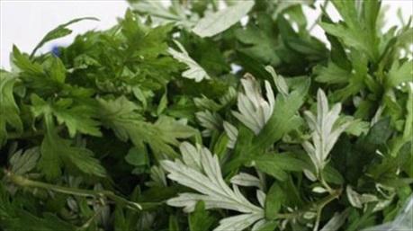 Thải độc tố, làm sạch gan mật với loại rau có nhiều ở Việt Nam