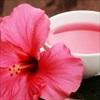 Chống ung thư, trầm cảm với trà hoa dâm bụt