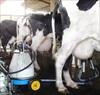 6 lý do khiến bạn muốn chuyển ngay từ sữa bò sang uống sữa hạt