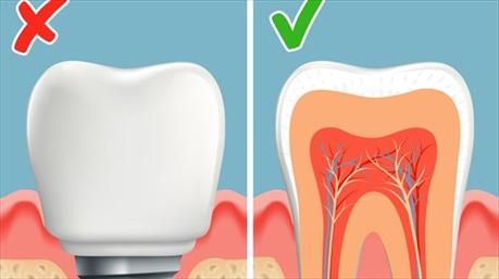 Các nhà khoa học đã tìm ra cách nào giúp bệnh nhân mọc răng mới chỉ sau 2 tháng?