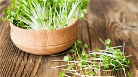 Cách trồng rau mầm cực đơn giản, cả nhà ăn cả mùa không hết