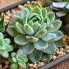 8 loại cây trồng tốt cho sức khỏe không thể thiếu trong vườn nhà