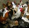 Nga lần đầu tiên ghi nhận trường hợp lây nhiễm virus cúm gia cầm H5N8 ở người
